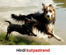 Hirdi kutyastrand